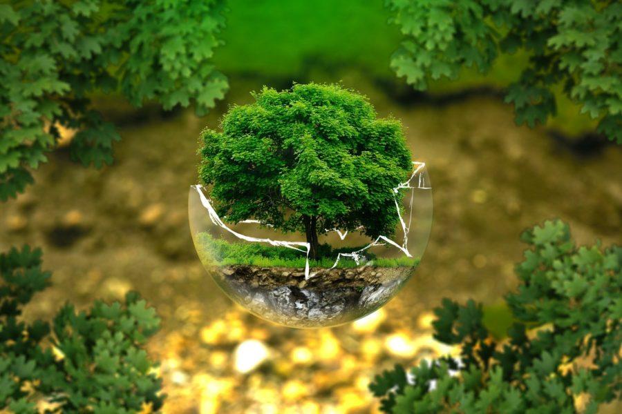 2020, année de l'environnement