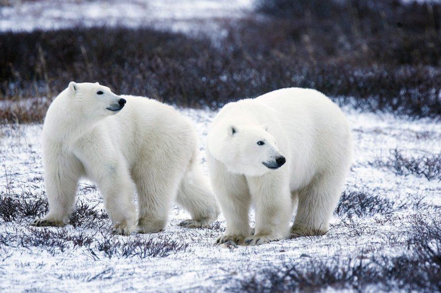 Attention : animaux en voie de disparition !
