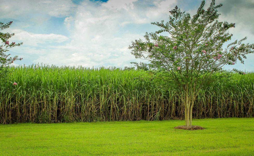La République Dominicaine et ses champs de canne-à-sucre