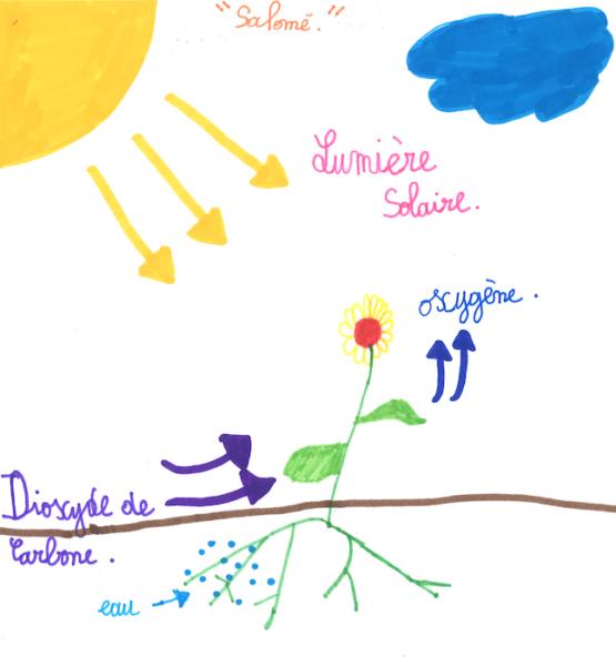 La photosynthèse, qu'est-ce que c'est ?