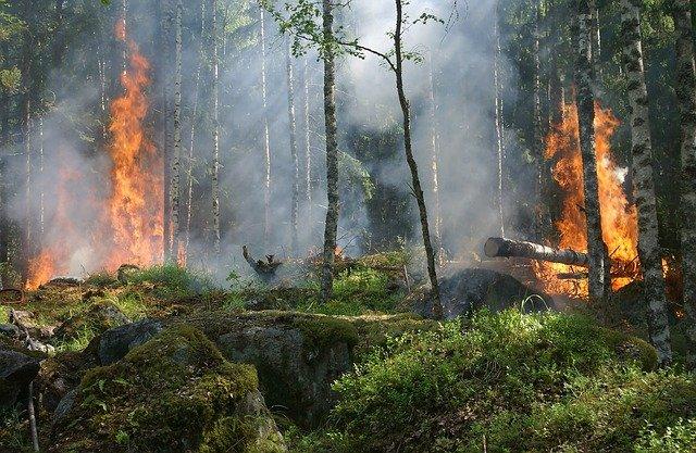 Incendies et réchauffement climatique