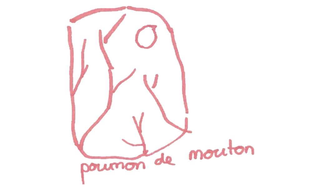 Un poumon de mouton en SVT